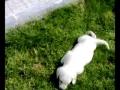 a brincar no jardim
