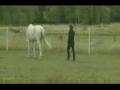 A lição do cavalo