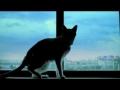 Gato à janela - fast forward