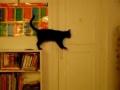Como abrir uma porta? O gato demonstra...