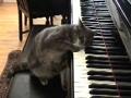 gatinha pianista