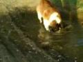 Um Video Porco do PAIKEA :)